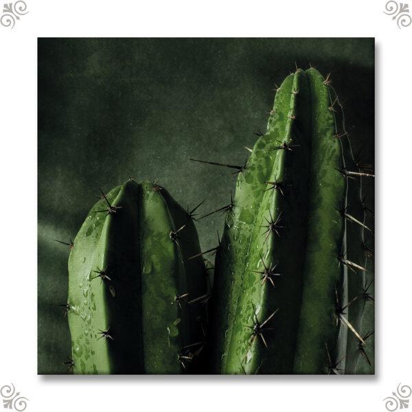 Canvasmotiv Kaktus 1