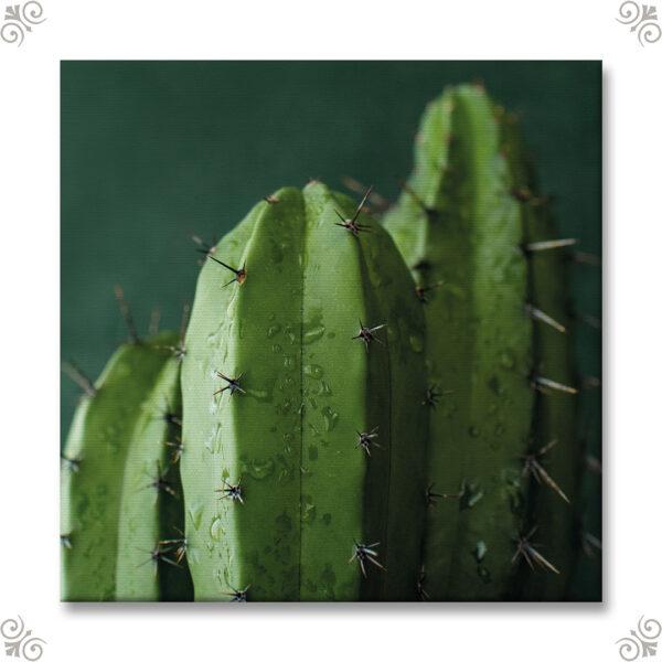 Canvasmotiv Kaktus